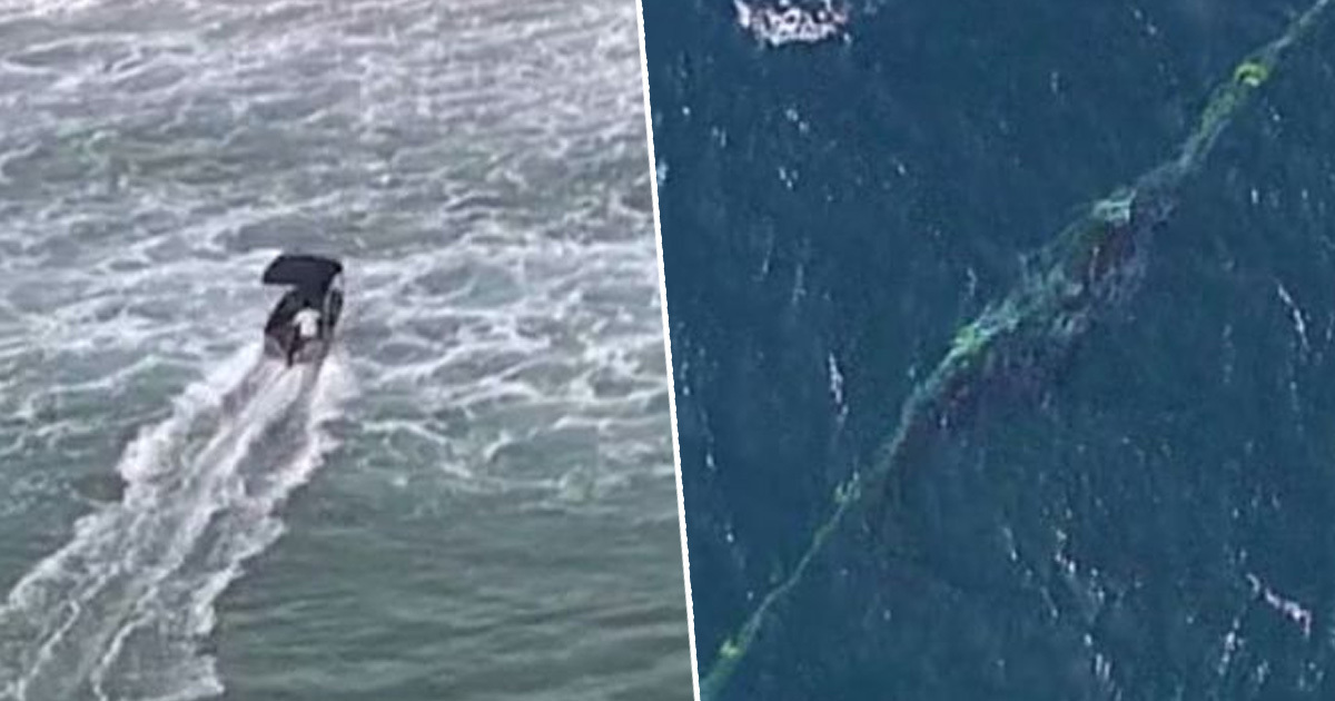 Australian Man Fined For Rescuing Trapped Whale From Sea Nets