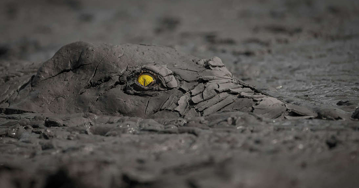 Menacing Mud-Covered Crocodile Among Winners Of GDT Nature Photographer Of The Year Competition